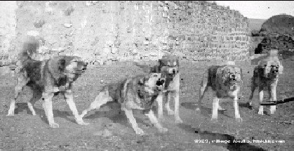 Amitriptyline Dogs Uk